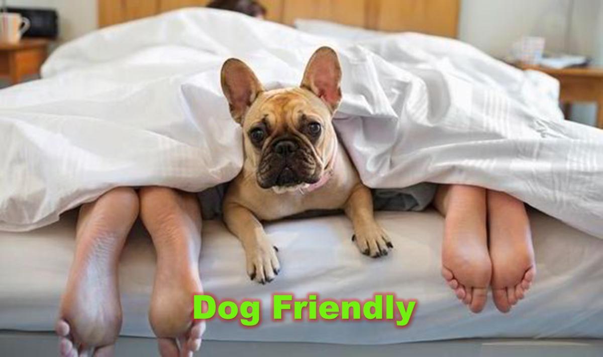 Pet Friendly Hotels Travel Agent